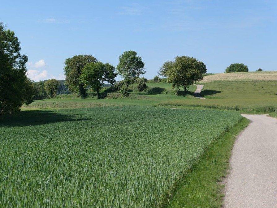 Landshausen_Weg_nach_Muenzesheim.jpg
